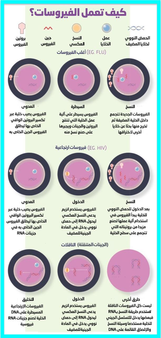 دور الفيروسات في تطورنا .. كيف تعمل الفيروسات
