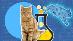 قطة-شرودنجر
