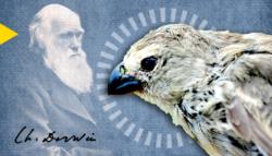التهجين أصل الأنواع تشارلز داروين عصافير داروين